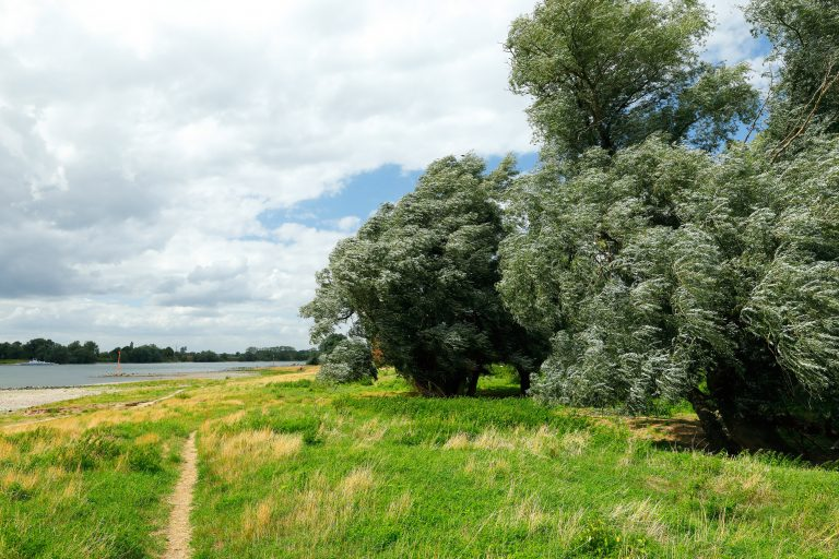 Landschaft mit Bäumen und Fluss